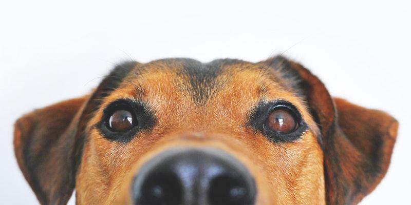 Cómo nuestras mascotas pueden ayudarnos con nuestros problemas psicológicos